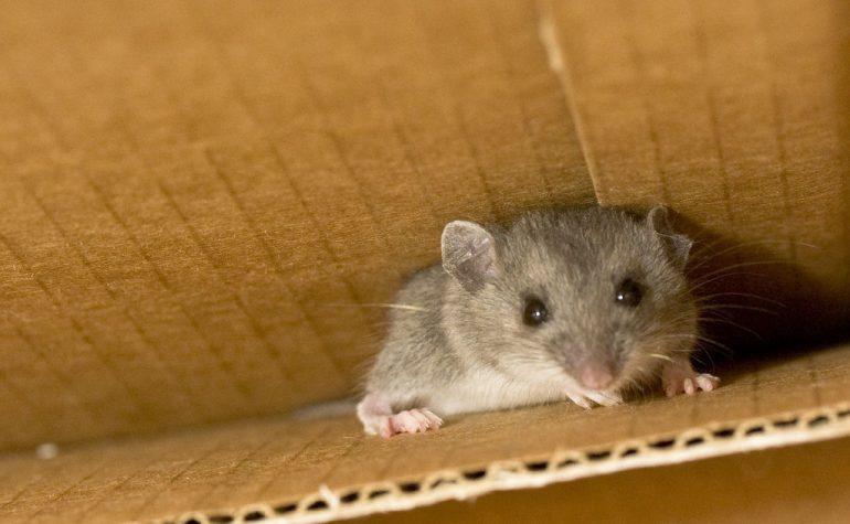 Tips om muizen te bestrijden