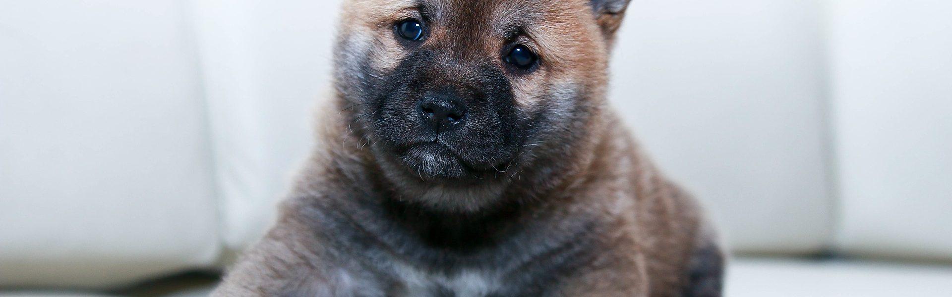 Wat heb je nodig voor de komst van een puppy?